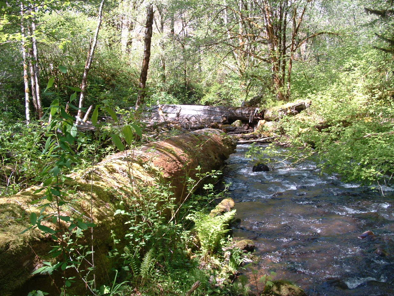 mckenzie watershed council about us