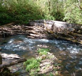 Upper Mohawk River 4-27-04 011