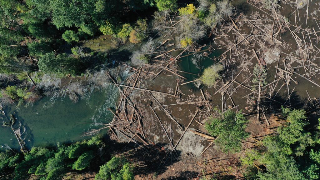 Aerial view of large wood scattered acorss watered floodplain in South Fork McKenzie River