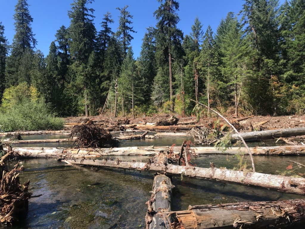 Large wood in rewatered South Fork McKenzie River Floodplain