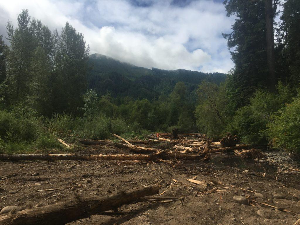 Large wood in dewatered floodplain