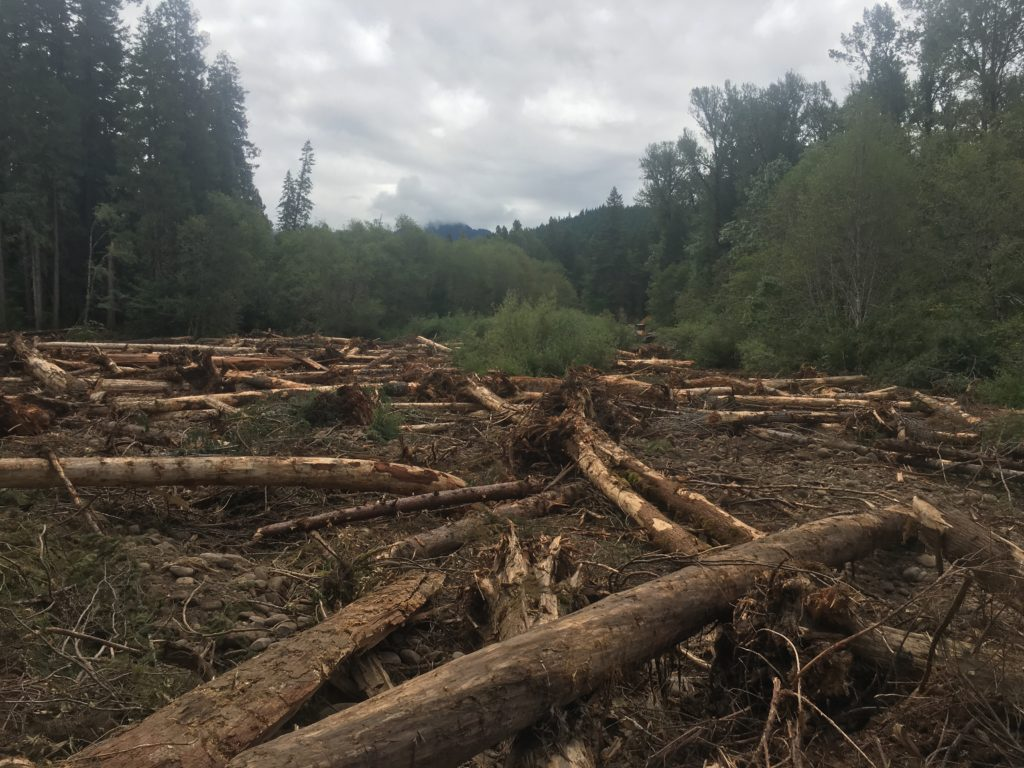 Large wood in de-watered floodplain