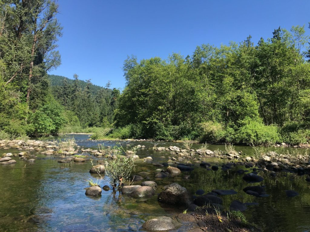 Cobble substrate in shallow section of creek, on South Fork McKenzie River prior to floodplain project